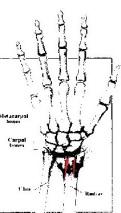 hand 293