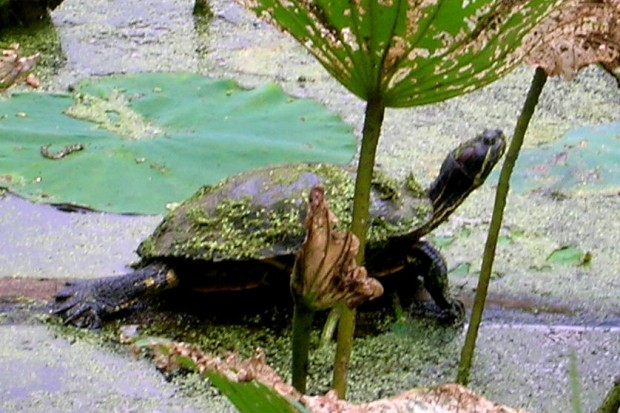 turtlelcloseup5by7
